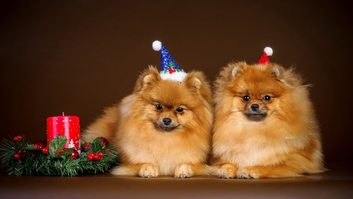 С наступающими новогодними праздниками!